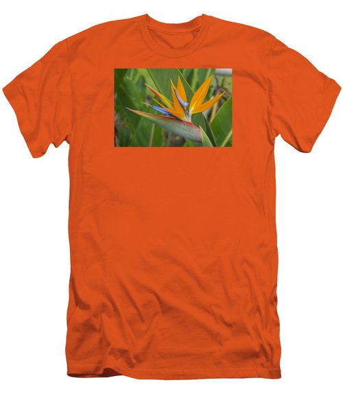 Bird Of Paradise Men's T-Shirt (Slim Fit) by Christina Lihani