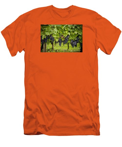 Chardonnay Grape Cluster Men's T-Shirt (Slim Fit) by Perry Van Munster