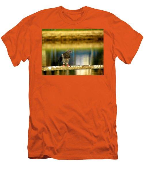 Daytona Beach Pigeon Men's T-Shirt (Slim Fit) by Chris Mercer