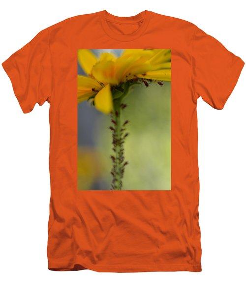 Heliopsis Infested Men's T-Shirt (Slim Fit) by Janet Rockburn