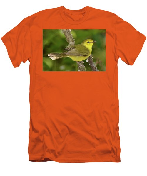 Hooded Warbler Female Men's T-Shirt (Slim Fit) by Alan Lenk