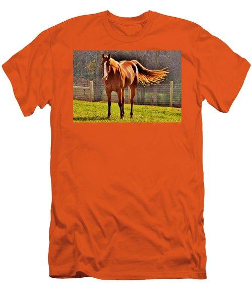Horse's Tail Men's T-Shirt (Athletic Fit)