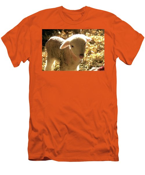 Lamb All Aglow Men's T-Shirt (Athletic Fit)