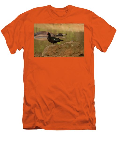 Muscovy Duck Men's T-Shirt (Athletic Fit)