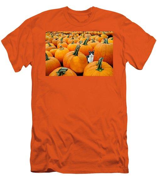 Pumpkin Patch Cat Men's T-Shirt (Athletic Fit)