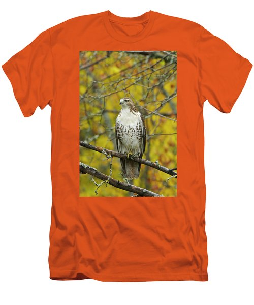 Red Tail Hawk 9888 Men's T-Shirt (Slim Fit) by Michael Peychich