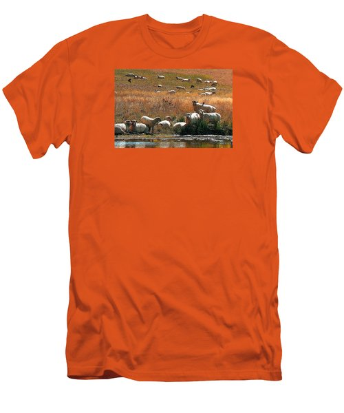 Sheep Country Men's T-Shirt (Slim Fit) by Deborah Moen