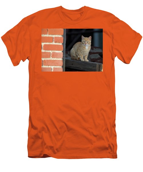 Street Cat Men's T-Shirt (Slim Fit) by Scott Warner