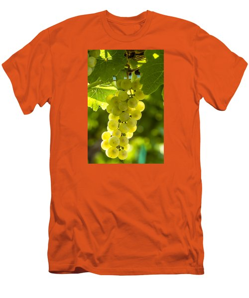 White Wine Grapes Lit By The Sun Men's T-Shirt (Slim Fit) by Teri Virbickis