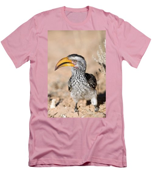 Southern Yellow-billed Hornbill Men's T-Shirt (Athletic Fit)
