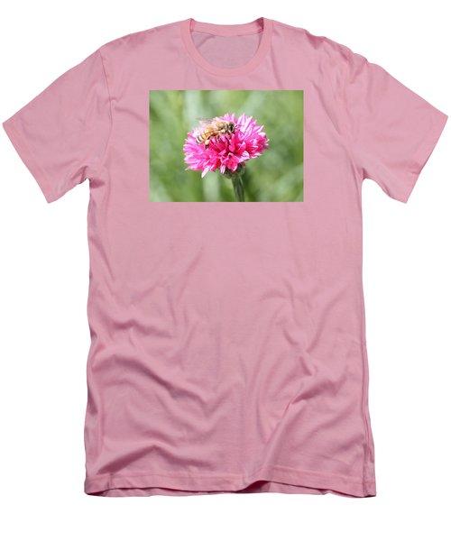 Honeybee On Pink Bachelor's Button Men's T-Shirt (Slim Fit) by Lucinda VanVleck