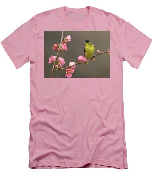 Lesser Goldfinch Men's T-Shirt (Slim Fit) by Doug Herr