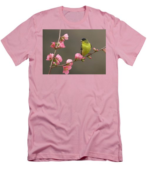 Lesser Goldfinch Men's T-Shirt (Athletic Fit)