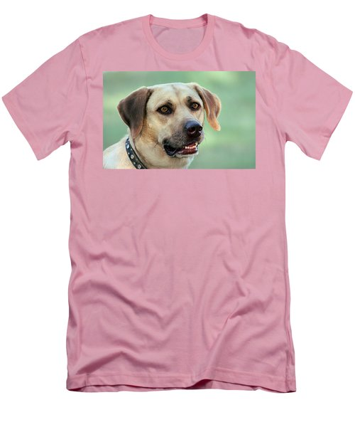 Portrait Of A Yellow Labrador Retriever Men's T-Shirt (Athletic Fit)
