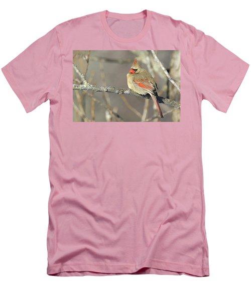 Pretty Female Cardinal Men's T-Shirt (Slim Fit) by Brook Burling