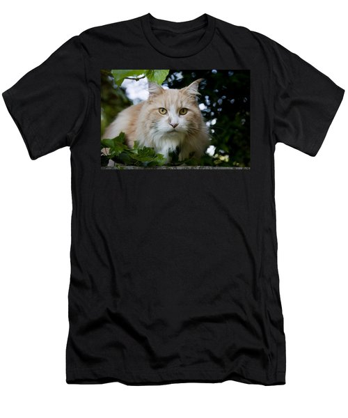 Cream And White Cat Men's T-Shirt (Athletic Fit)