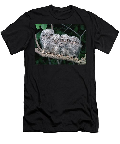 Eastern Screech Owls Men's T-Shirt (Athletic Fit)