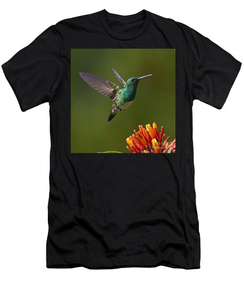Snowy-bellied Hummingbird Men's T-Shirt (Athletic Fit)
