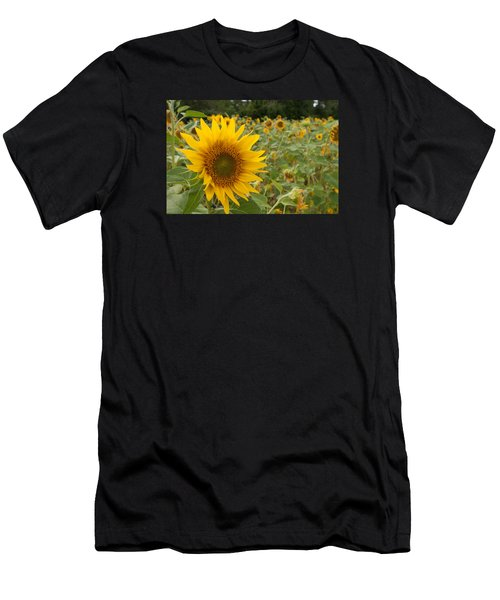 Sun Flower Fields Men's T-Shirt (Athletic Fit)