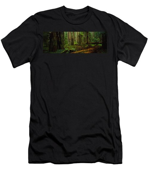 Trees In A Forest, Hoh Rainforest Men's T-Shirt (Athletic Fit)