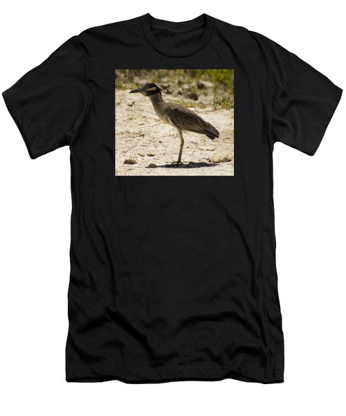Yellow-crowned Night-heron Men's T-Shirt (Athletic Fit)