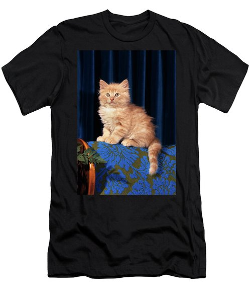 1980s Kitten Sitting On Back Of Chair Men's T-Shirt (Athletic Fit)