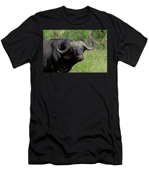 Cape Buffalo Men's T-Shirt (Athletic Fit)