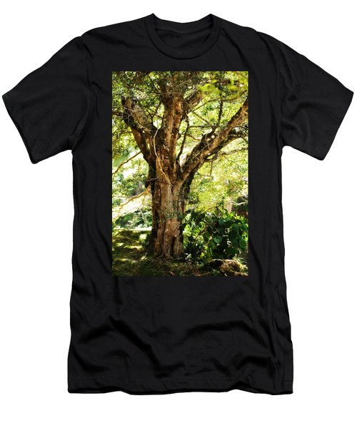 Kingdom Of The Trees. Peradeniya Botanical Garden. Sri Lanka Men's T-Shirt (Athletic Fit)