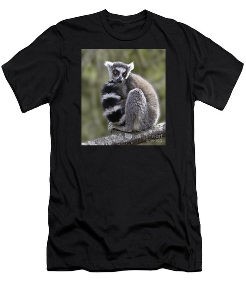 Ring-tailed Lemur Men's T-Shirt (Athletic Fit)