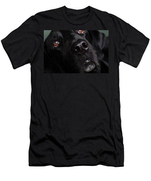 Portrait Of A Labrador Great Dane Mixed Men's T-Shirt (Athletic Fit)