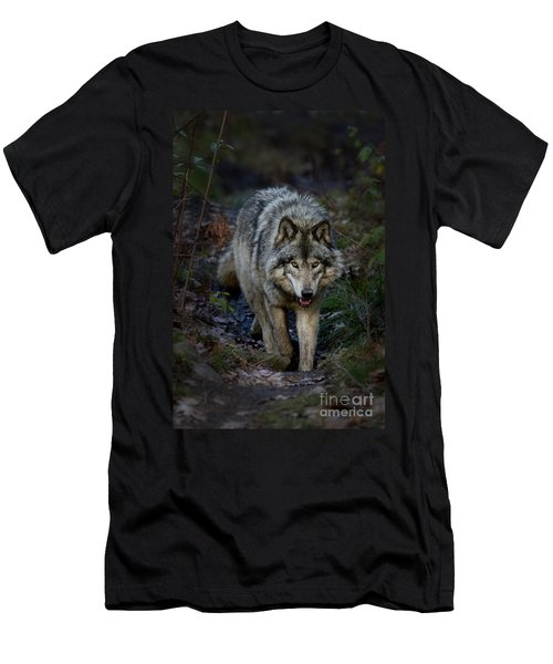 Timber Wolf Men's T-Shirt (Athletic Fit)