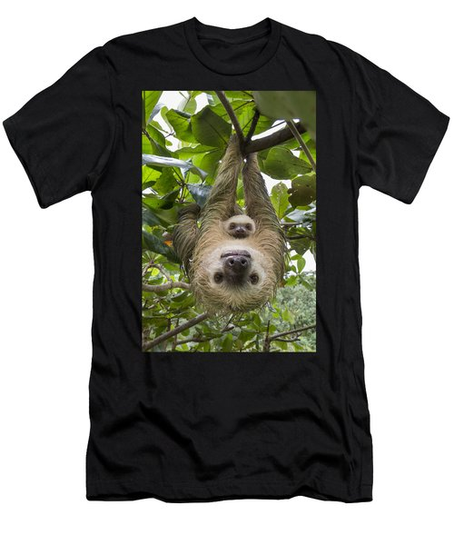 Men's T-Shirt (Athletic Fit) featuring the photograph Hoffmanns Two-toed Sloth And Old Baby by Suzi Eszterhas