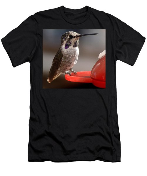 Men's T-Shirt (Slim Fit) featuring the photograph Female Anna's Sitting On Perch by Jay Milo