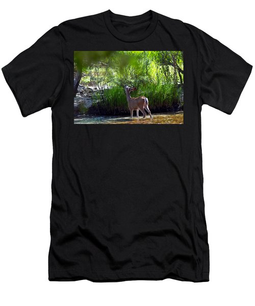 A Buck Feeding Men's T-Shirt (Slim Fit) by Brian Williamson