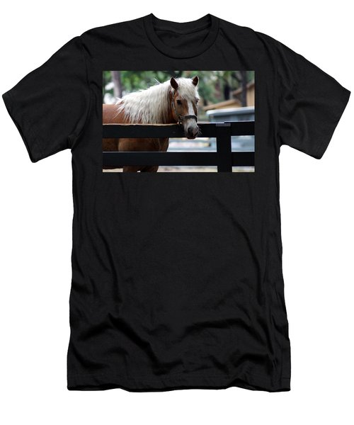 A Hilton Head Island Horse Men's T-Shirt (Athletic Fit)