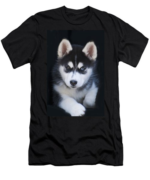 Adorable Siberian Husky Sled Dog Puppy Men's T-Shirt (Athletic Fit)