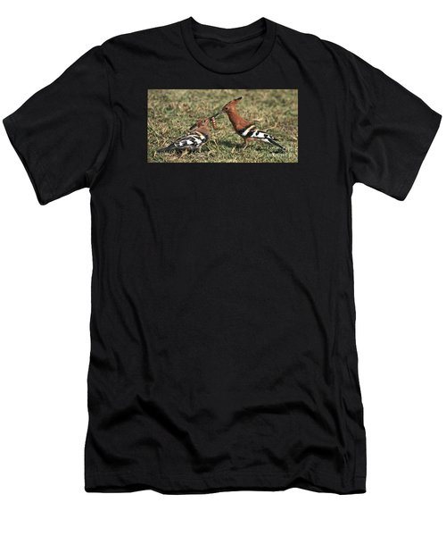 African Hoopoe Feeding Young Men's T-Shirt (Athletic Fit)