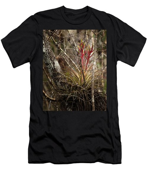 Air Plant Men's T-Shirt (Athletic Fit)