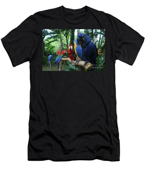 Aloha Kaua Aloha Mai No Aloha Aku Beautiful Macaw Men's T-Shirt (Athletic Fit)