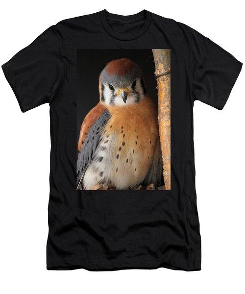 American Kestrel Men's T-Shirt (Slim Fit) by Diane Alexander