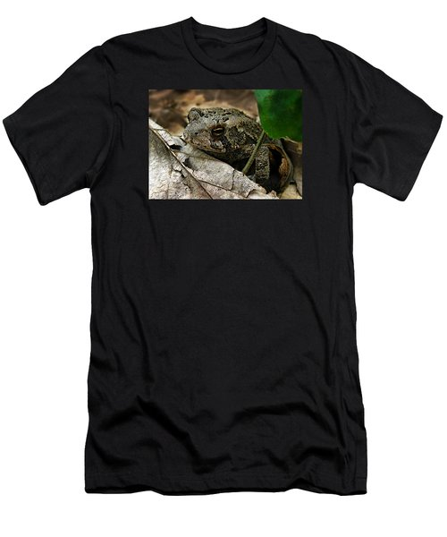 American Toad Men's T-Shirt (Slim Fit) by William Tanneberger