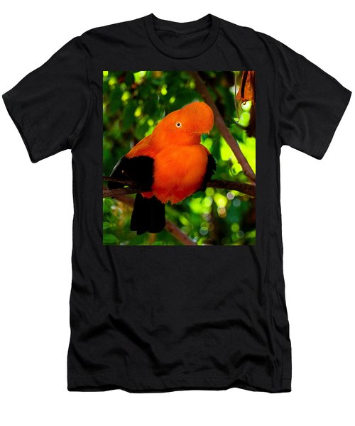 Andean Cock Of The Rock Men's T-Shirt (Athletic Fit)