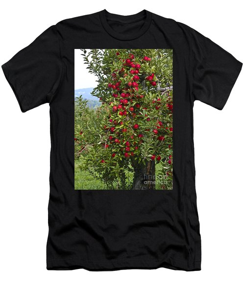 Apple Tree Men's T-Shirt (Slim Fit)