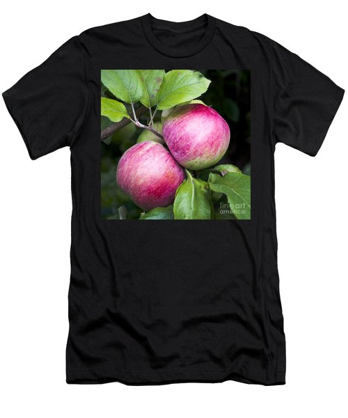 2 Apples On Tree Men's T-Shirt (Athletic Fit)