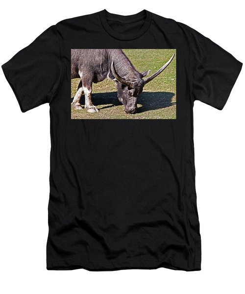 Asian Water Buffalo  Men's T-Shirt (Athletic Fit)