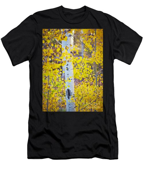 Aspen Tree Yellow Fall Foliage Men's T-Shirt (Athletic Fit)