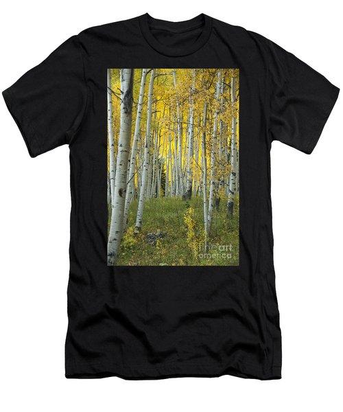 Autumn In The Aspen Grove Men's T-Shirt (Athletic Fit)