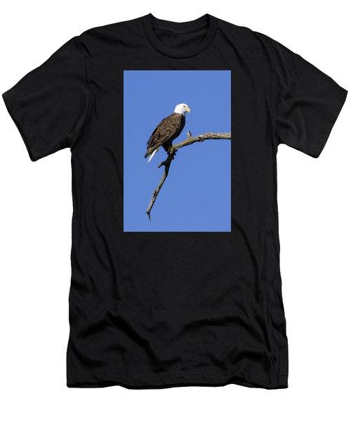 Bald Eagle 4 Men's T-Shirt (Athletic Fit)
