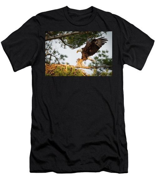 Bald Eagle Building Nest Men's T-Shirt (Athletic Fit)