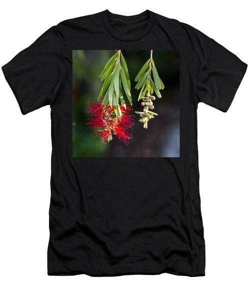 Banksia - Australia Men's T-Shirt (Athletic Fit)